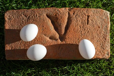 Fresh white organic eggs on a brick with chicken paw print