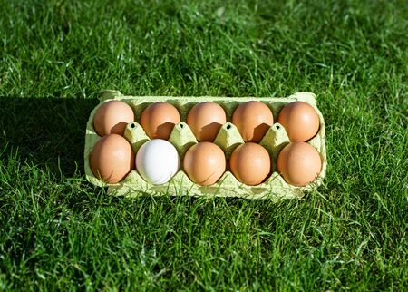 Fresh chicken eggs in a paper box on a background of green grass. Nine brown eggs and one white