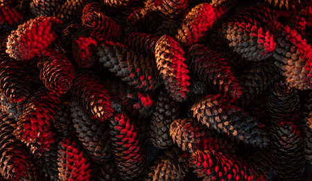 Heap of fir cones in modern colors. Natural background