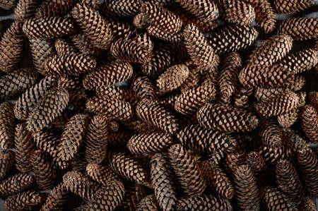 Heap of fir cones. Natural background 免版税图像