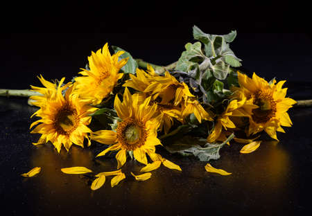 Beautiful bouquet of sunflowers over black background. Autumn still life