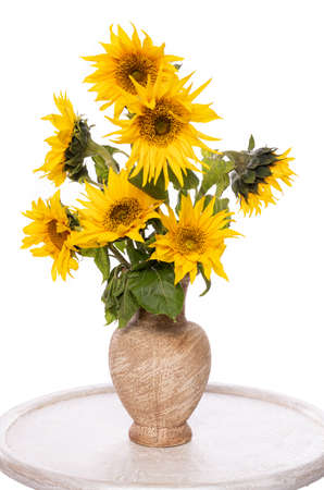 Beautiful sunflowers in vase on the table over white background