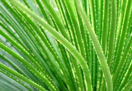Long narrow green leaves with blurred background