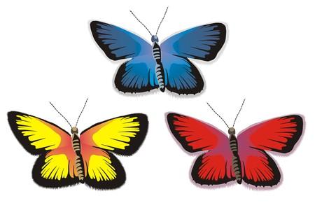 batterfly: Batterfly in colors Illustration