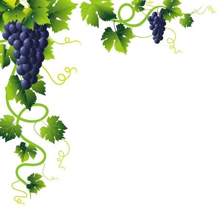 vid: esquina de liana anstract verde y racimo de uvas azules Vectores