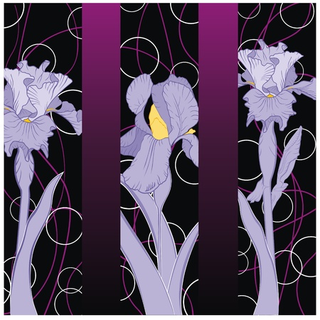 spring flowering iris pattern on strip background