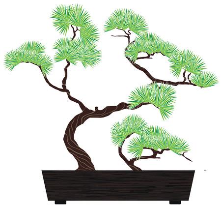 盆栽の緑の暗い木製の箱で松の木  イラスト・ベクター素材