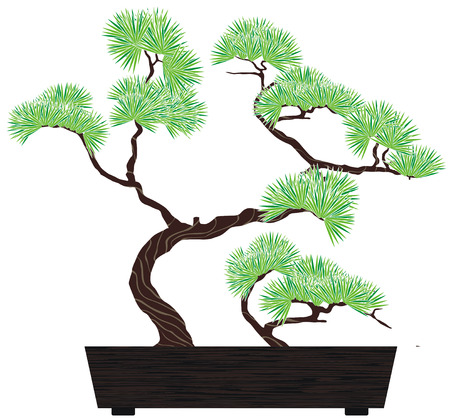bonsai green tree pine in dark wooden box Vector