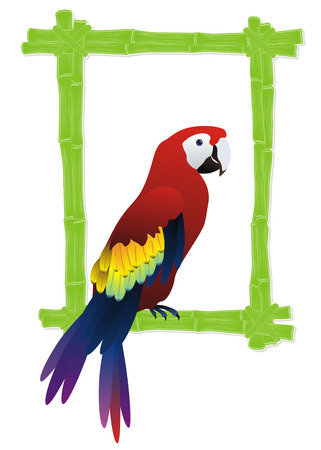 bamboo frame: green bamboo frame with tropical bird parrot inside Illustration