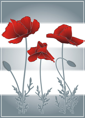 gray strip: summer flowering red poppies on gray strip background