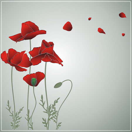 summer flowering red poppies on olive background Vector