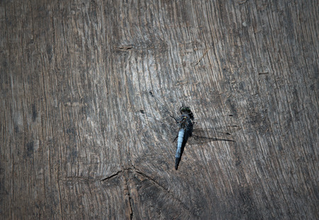 wooden table or background with dragonfly Imagens