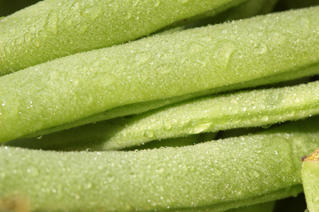 pods of green beans with water drops
