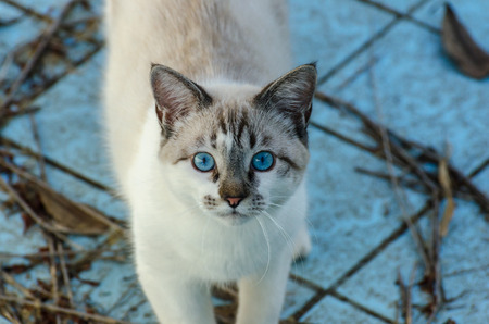 scamp: Cute cat with blue eyes playing inside an empty swimming pool