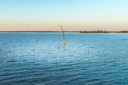 Submerged branch on the parana river in Itaipu dam park at the brazilian border.
