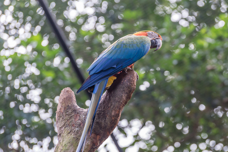 aviary: Colorful of Blue and Gold Macaw aviary parrots portrait