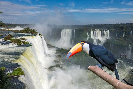 ブラジルとアルゼンチンの国境にあるイグアスの滝国際空港 (イグアス) 滝でオオハシ トコ 写真素材