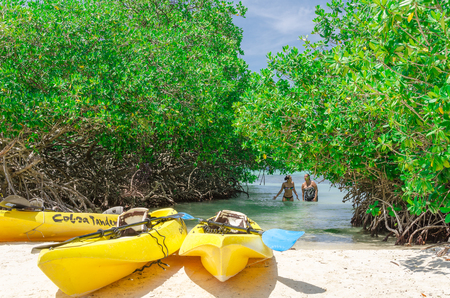 paddles: Aruba, Caribbean - September 28, 2012: Kayaks at the Mangel Halto beach in Aruba, a caribbean paradise Island