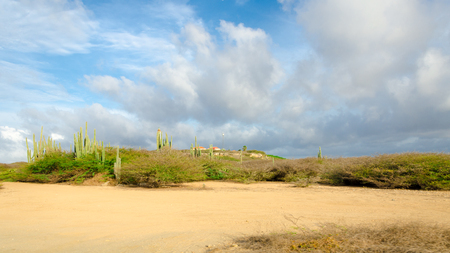 desert ecosystem: Dry and arid desert landscape with cactus and native plants in Aruba Island at the Caribbean sea Stock Photo