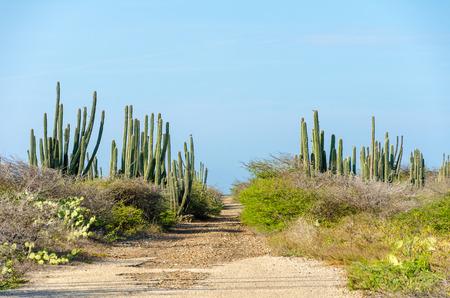 aruba: Dry and arid desert landscape with cactus and native plants in Aruba Island at the Caribbean sea Stock Photo
