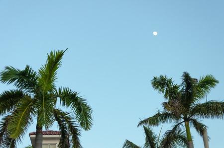 aruba: Rest area with Palm trees by the beach in Aruba Island