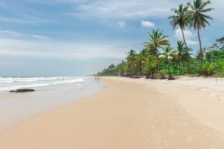 Itacare, Brazil - December 7, 2016: Amazing green nature at the Itacarezinho beach in Bahia Redakční