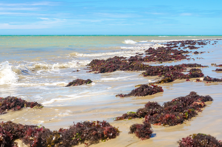 lots of water plants over the sand beach and blue sky on the background