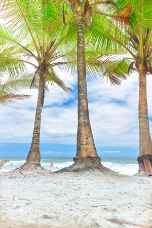 Coconut tree trunks on the beach on a sunny day Фото со стока