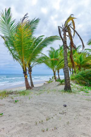 Rich beach vegetation in Itacare at the Bahia state in Brazil