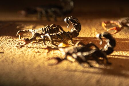 The fake scorpions over the sand of the desert Stock Photo