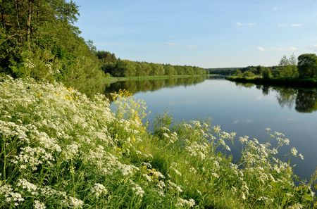 The riverside of Vilija covered with flowers Stock Photo