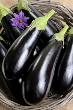Eggplants of black colour in a basket photo