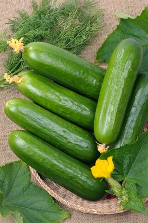 Smooth cucumbers in a basket, against leaves.