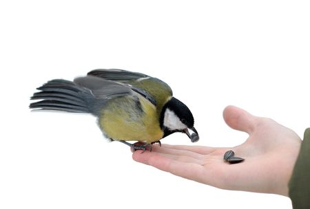 The titmouse takes sunflower seeds from a hand of the boy.
