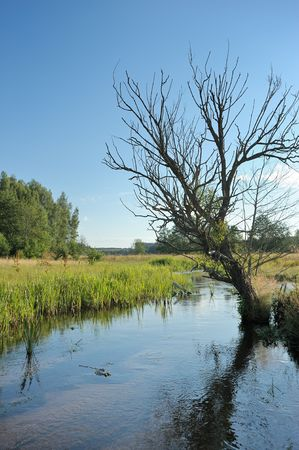 Summer landscape with stream and a dry tree.  photo