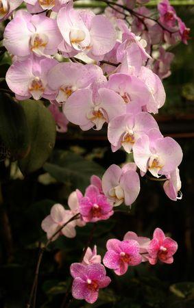 utopia: Tropical flowers in the park Utopia, Israel.