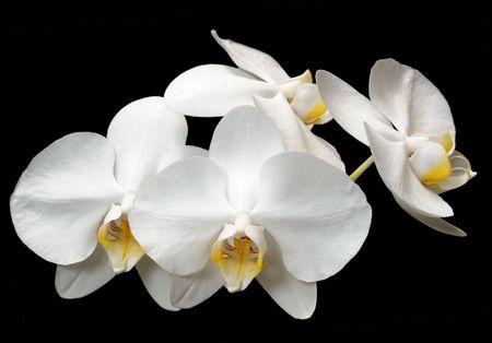 orchids: Fiori tropicali nel parco Utopia, Israele.
