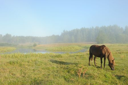 Landscape with a horse at a sunrise, in morning a mist. photo