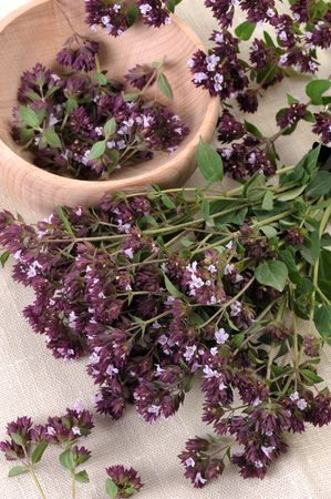 vulgare: A bunch of stems with flowers of aromatic and medicinal plants Origan (Origanum vulgare).