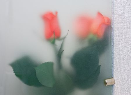 glass partition: Bouquet of red roses standing in the office behind a glass partition.