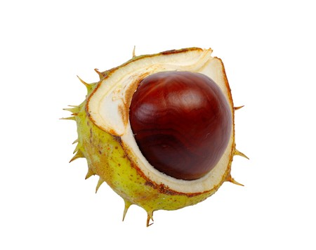 buckeye seed: Split in half prickly fruit of the horse chestnut