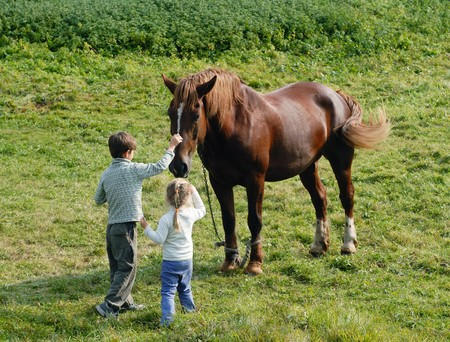 Boy and girl caress the horse in the meadow