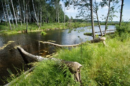 Lake in the forest and the trees felled by beavers Stock Photo - 7088241