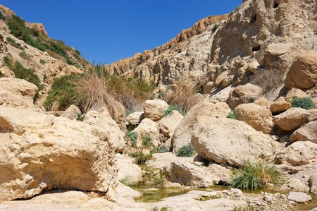 gedi: Rocks, streams and waterfalls, water and life in the arid desert - Ein Gedi nature reserve off the coast of the Dead Sea.