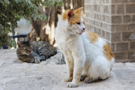 Two stray cats around the house in Jerusalem photo