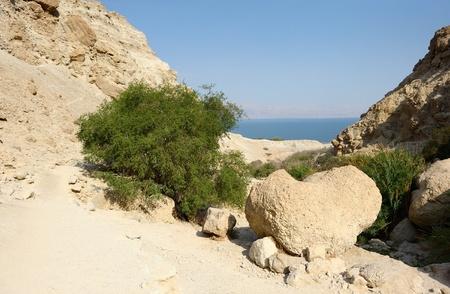 ein: Ein Gedi Nature Reserve on the coast of the Dead Sea