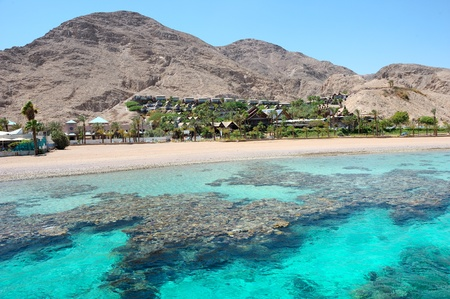 eilat: Coral reef in the Gulf of Eilat Red Sea