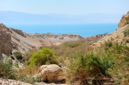 gedi: Ein Gedi Nature Reserve on the coast of the Dead Sea