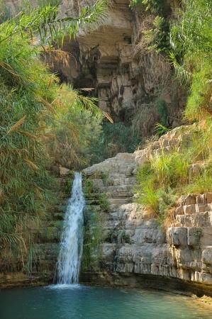 ein: Ein Gedi nature reserve, coast of the Dead Sea.