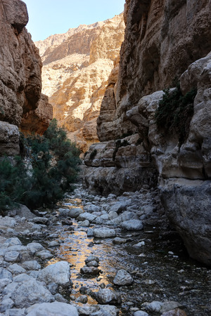 nature reserves of israel: Oasis in the desert, Ein Gedi nature reserve on the shore of the Dead Sea   Stock Photo